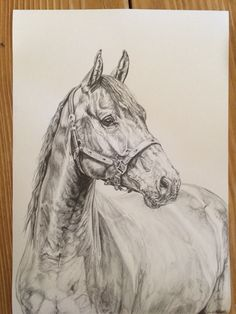 Sketch on A4 horse portrait pencil sketch quarter