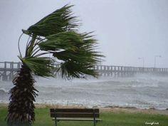 Resultado de imagem para gifs animados vento
