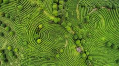The tea fields of Ceylon are as true a monument to courage as is the lion at Waterloo - Arthur Conan Doyle