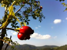 delame si to sami Samos, The Good Place, Remedies, Herbs, Fruit, Vegetables, Health, Homemade Products, Food