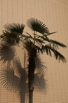 Brown Aesthetic, Aesthetic Photo, Aesthetic Art, Aesthetic Pictures, Minimal Photography, Tropical, Arbour Day, Aesthetic Iphone Wallpaper, Light And Shadow
