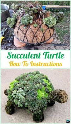 Topiary DIY Succulent Turtle Topiary Instruction- DIY Indoor Succulent Garden Ideas Projects - DIY Indoor Outdoor Succulent Garden Ideas Projects and Instructions: Interior Design with Succulent Garden Planter Designs and Display Ideas Succulent Planter Diy, Succulent Gardening, Garden Planters, Planting Succulents, Garden Art, Container Gardening, Organic Gardening, Succulent Ideas, Propagate Succulents