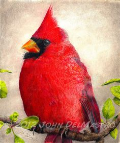 Color Pencil Drawing - Cardinal - Bird Drawing - Giclee Print by John DelMastro