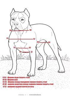 выкройка комбинезона для собаки удобный покрой: 16 тыс изображений найдено в Яндекс.Картинках