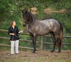 DEM Felicity gray Lusitano mare standing with her new owner