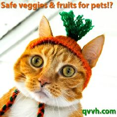 SAFE FRUITS & VEGGIES FOR PETS! Low-calorie treats that provide all natural alternatives to processed treats. Pin now, read later!  #pets #health #tips #healthy #weightloss