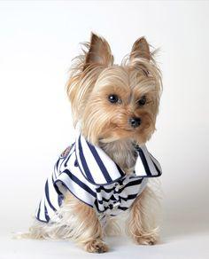 Jersey marinero para perro Nala azul
