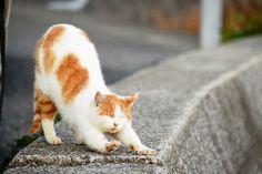 Ho vissuto con diversi maestri Zen ...erano tutti dei gatti 😽 (Eckhart Tolle)