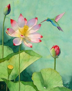 Lotus & Hummingbird Painting -by Robert Hooper