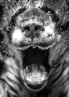 Underwater dog 4 by Seth Casteel