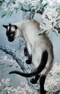 "C.F. Tunnicliffe (1901-1979), ""Siamese Cat on a branch"". #Siamese #Cat"