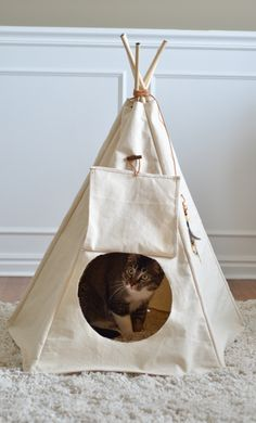 Steve's genius idea, a teepee for Kitty!! Here she is, checking out the neighbours after moving into her new house