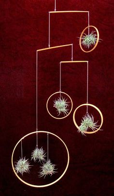 air plant mobile made from chopsticks and bathtub chain