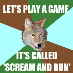sorry not sorry. camp counselor coyote