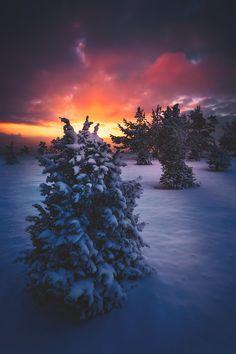 "banshy: "" Winter Glow // Martin Amm """