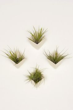 Ceramic Wall Planters by Light + Ladder   Styled Canvas