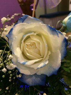 Rosas de tu color favorito