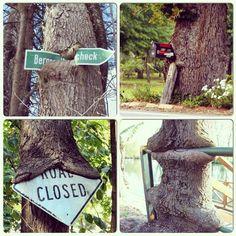 Сила дерева!
