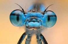 Close up portraits of bugs!