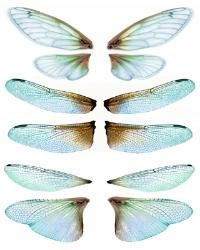 OOAK Artist Emporium - Fairy Wing Prints, many wonderful choices for wings! Dragonfly Wings, Butterfly Wings, Fairy Wings, Paperclay, Doll Tutorial, Vintage Paper Dolls, Resin Crafts, Diy Crafts, Fairy Art