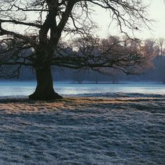 Morning blues... 48hrs of winter ... by bobbimac
