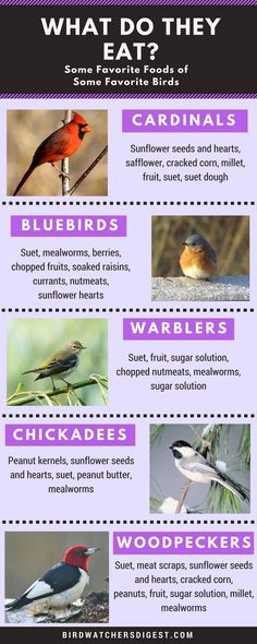 Do you know what to feed the birds in your backyard? Bird Watcher's Digest has some bird feeding suggestions for some favorite species. Funny Bird, Sunflower Hearts, Bird Identification, What Is A Bird, Bird House Kits, Bee House, Birds And The Bees, How To Attract Birds, Backyard Birds