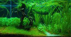 Hungarian Aquascaping Contest (HAC) - Galéria