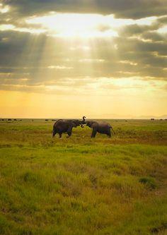 Spectacular travel snapshots: Elephants in Amboseli Kenya, just being magical - Hubub