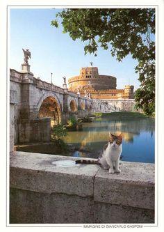 gatto con colosseo - Szukaj w Google