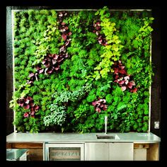 Habitat Horticulture | A flash of greenery atop a bar at a Folsom Street apartment in South of Market San Francisco. #VerticalGarden #LivingWall