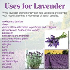 An infusion of the Lavender flower in a cup of boiling water before bedtime is thought to act as a relaxant and can help one sleep. LIKE and SHARE if you find this information useful.