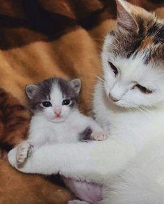 So sweet! Mom cat & baby. ❤️❤️❤️❤️❤️❤️