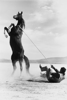 ♂ it's a Man's World black & white photo Ernst Haas, Stuntman with Mustang on the set of The Misfits, 1960.