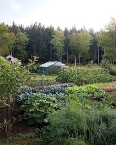 Four Seasons Organic Farm/Eliot Coleman and Barbara Damrosch's small organic farm yields more than just vegetables -- it inspires a new way of life for a fresh crop of gardeners.