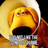 """""""Up"""" the movie...if our dog could talk..he would sound like this dog lol"""