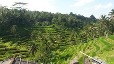 Bali Ubud rise worldwonder green