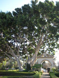 Balboa Park, San Diego, CA!!!