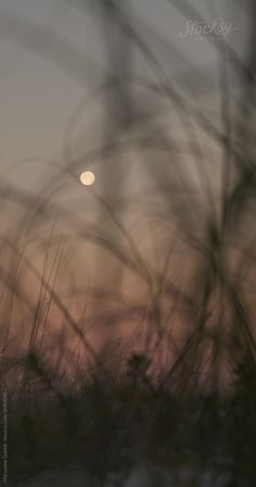 Grass Silhouette, Photographie Indie, Pensacola Florida, Aesthetic Photography Grunge, Sunset Photography, Camera Photography, Nature Gif, Beautiful Photos Of Nature, Nature Aesthetic