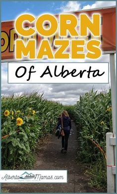 Corn Mazes of Alberta - Albertamamas.com Newfoundland Tourism, Adventure Farm, Haunted Attractions, Ropes Course, Corn Maze, Garden Show, Travel Oklahoma, Canadian Rockies, Caribbean Cruise