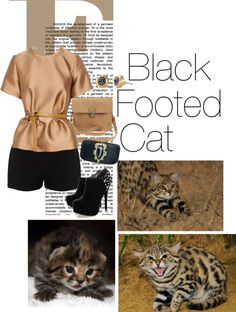 """Black Footed Cat"" by forestcat-lsc ❤ liked on Polyvore"