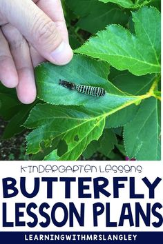 Looking for a preschool or kindergarten appropriate lesson plans and activities on butterflies? This product includes hands on activities, fun facts, and reading opportunities to investigate different types of butterflies and the life cycle of a butterfly! Stages Of A Butterfly, Types Of Butterflies, Butterfly Life Cycle, Kindergarten Activities, Preschool, Vocabulary Cards, Science Lessons, Hands On Activities, Lesson Plans