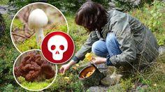 Giftiga svampar – de här ska du se upp för | Leva & bo Munnar, Ska