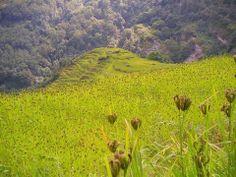 Wonderful Millet field