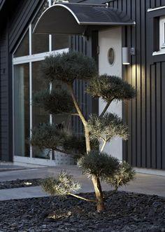 Spotlight i Trädgårdsserien från Markslöjd. Kopplingsbar till spotserien Trädgård. Hela 6st x 1W LED och en lite mindre spridningsvinkel, gör att denna spot lämpar sig för att belysa lite högre träd. #outdoor #lighting #utomhusbelysning #markslöjd #inspiration #interior #interiör