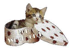 Gattino nella scatola Bon Weekend, Weekend Gif, Creatures, Animation, Animals, Gifs, Night, Cards, Kittens