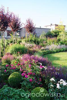 Ogrodowa przygoda Łukasza :) - strona 906 - Forum ogrodnicze - Ogrodowisko