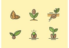 Organic Gardening Magazine Back Issues Refferal: 7806595783 Avocado Plant From Seed, Avocado Seed, Planting Lemon Seeds, Sprouting Seeds, Seed Illustration, Lemon Plant, Icon Design, Logo Design, Line Art Vector