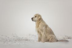 golden winter - null