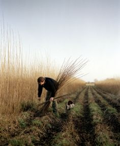 willow growers, somerset levels. andrew montgomery.