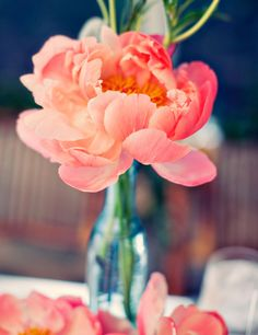 Love the open, softness of this peony and the contrast between the richness of the flower and the coolness of the vase.